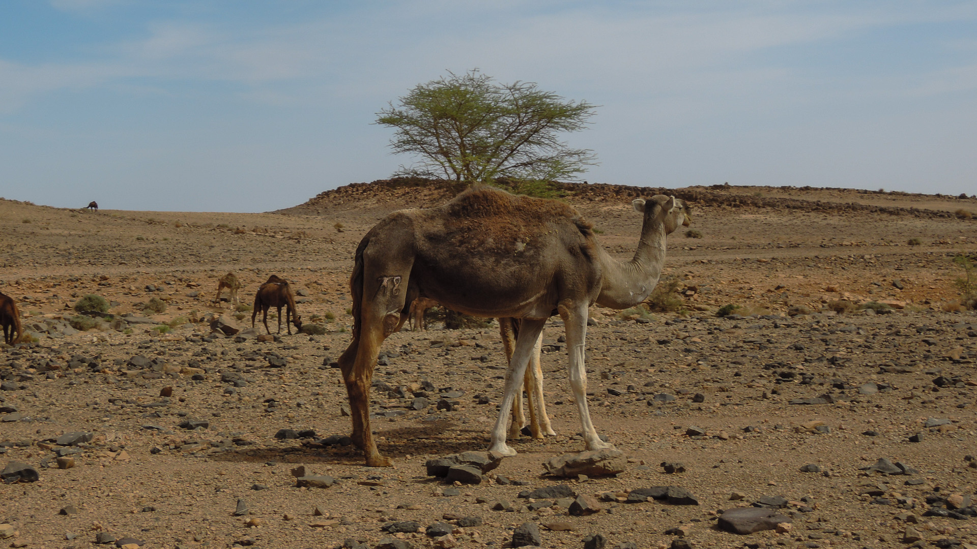 Westsahara Marokko